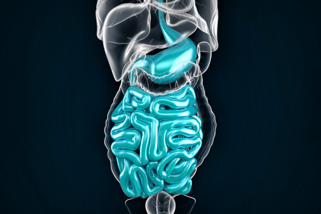 intestine-3d-illustration-contains-clipping-path_1401-1280